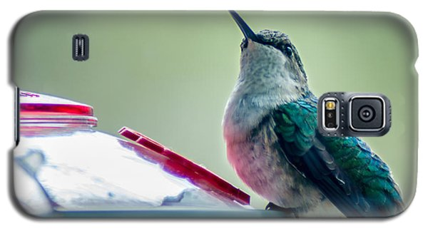 Galaxy S5 Case featuring the photograph Hummingbird by Todd Soderstrom