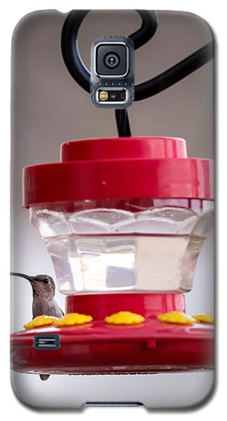 Hummingbird Tongue Galaxy S5 Case