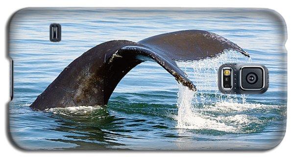Humpback Whale Fluke. Galaxy S5 Case