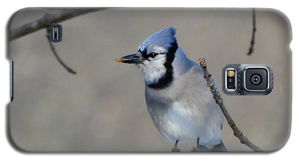 Hungry Blue Jay Galaxy S5 Case