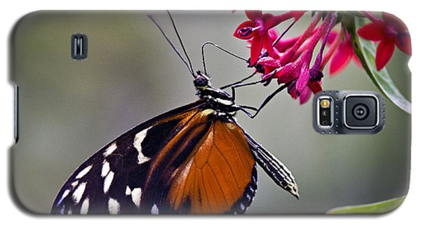 Hungry Butterfly Galaxy S5 Case