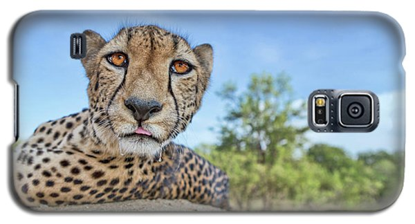 Cheetah Galaxy S5 Case - Hungry Cheetah by Alessandro Catta