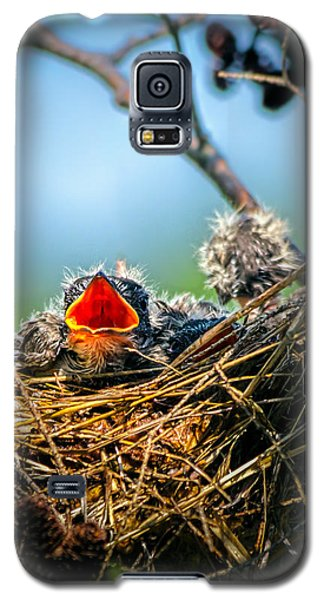 Hungry Tree Swallow Fledgling In Nest Galaxy S5 Case