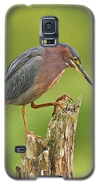 Hunting Green Heron Galaxy S5 Case