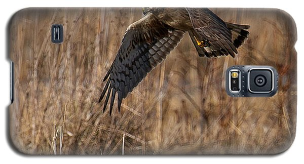Hunting Harrier Galaxy S5 Case