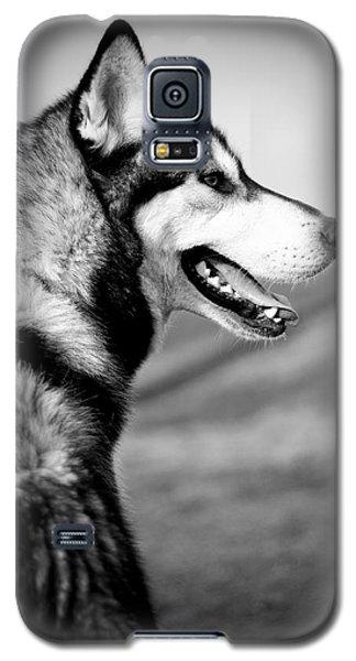 Husky Portrait Galaxy S5 Case by Mike Taylor