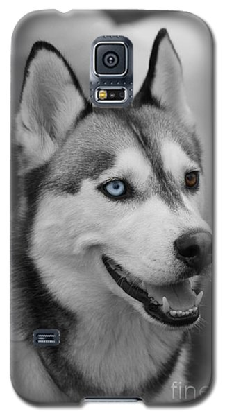 Husky Portrait Galaxy S5 Case by Vicki Spindler
