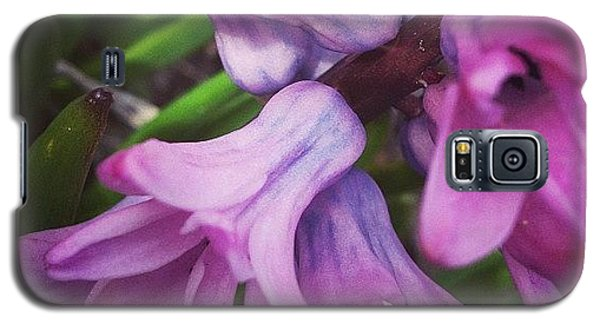 Floral Galaxy S5 Case - Hyacinth Flower by Christy Beckwith