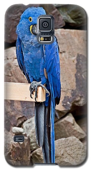 Hyacinth Macaw Parrot Bird Art Prints Galaxy S5 Case