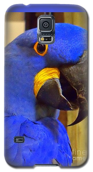 Hyacinth Macaw Portrait Galaxy S5 Case by Lingfai Leung