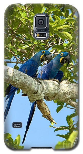 Hyacinth Macaws Brazil Galaxy S5 Case by Gregory G Dimijian MD