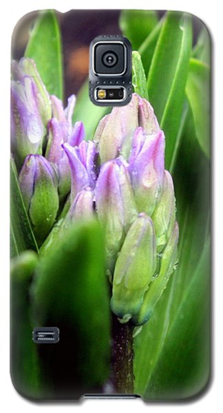 Sprouts Galaxy S5 Case