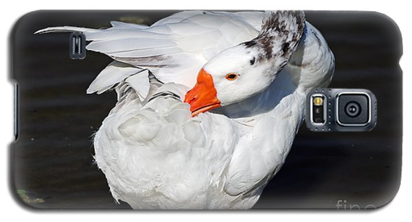 Hybrid Goose Grooming After A Swim Galaxy S5 Case