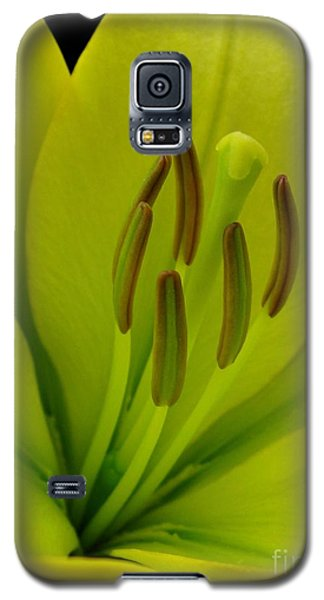 Galaxy S5 Case featuring the photograph Hybrid Lily Named Trebbiano by J McCombie