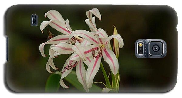 Hybrid Swamp Lily Galaxy S5 Case