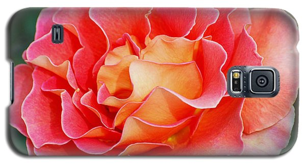 Hybrid Tea Rose  Galaxy S5 Case by Lisa Phillips