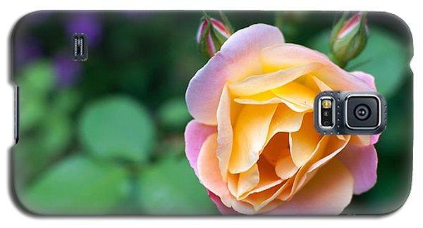 Galaxy S5 Case featuring the photograph Hybrid Tea Rose by Matt Malloy
