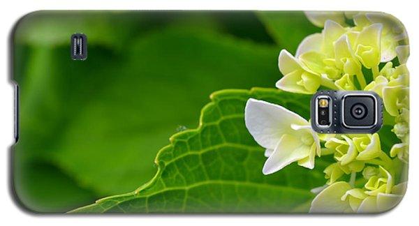 Hydrangea #1 Galaxy S5 Case