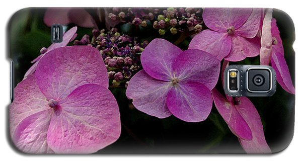 Galaxy S5 Case featuring the photograph Hydrangea Flowers  by James C Thomas