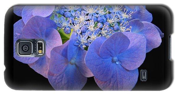 Hydrangea Blossom Macro Galaxy S5 Case by Brooks Garten Hauschild