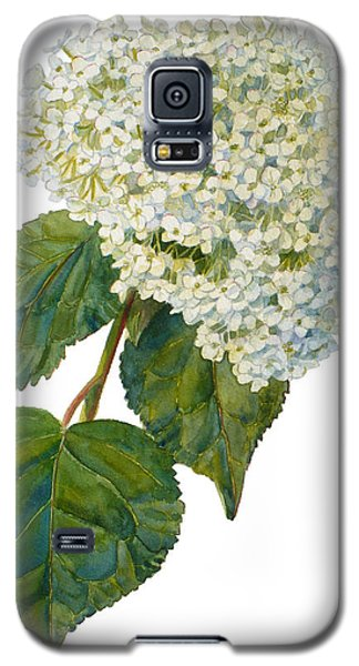 Hydrangea Aborescens Galaxy S5 Case