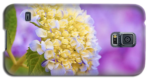 Hydrangea On Purple Galaxy S5 Case