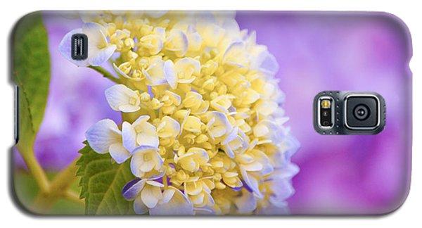 Hydrangea On Purple Galaxy S5 Case