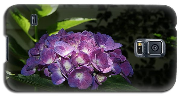 Hydrangea Season Galaxy S5 Case by Margie Avellino