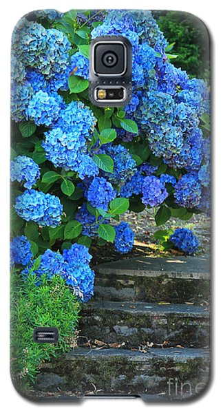 Hydrangea Steps 2 Galaxy S5 Case by Jeanette French