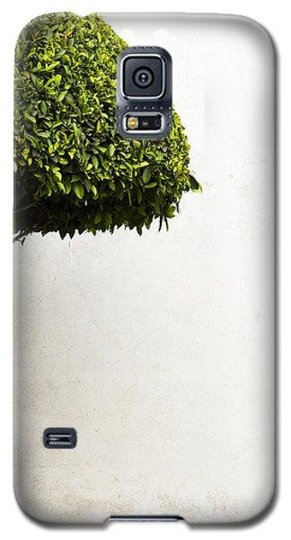 Hypnotic Tree Galaxy S5 Case