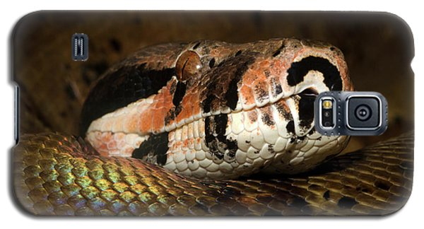 Hypo Colombian Boa Galaxy S5 Case by Nigel Downer