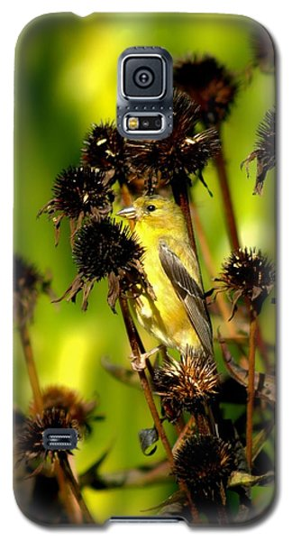 I Am A Flower Stalk Do You See Me Galaxy S5 Case