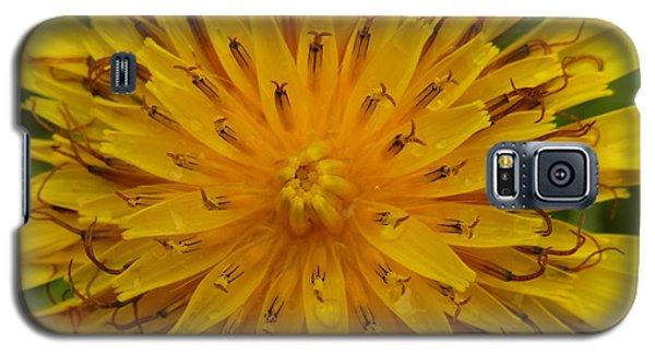 Galaxy S5 Case featuring the photograph I Am by Agnieszka Ledwon