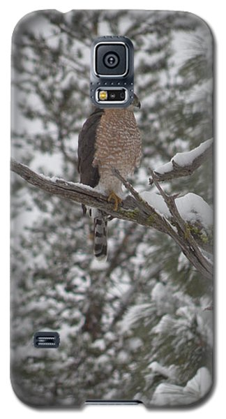 Galaxy S5 Case featuring the photograph I Am King by Jennifer Lake