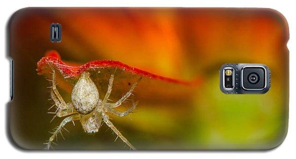 I Am Spiderman Galaxy S5 Case