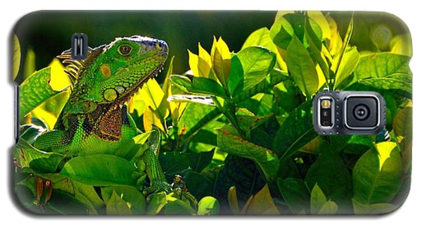 Galaxy S5 Case featuring the photograph I Can See You by Pamela Blizzard