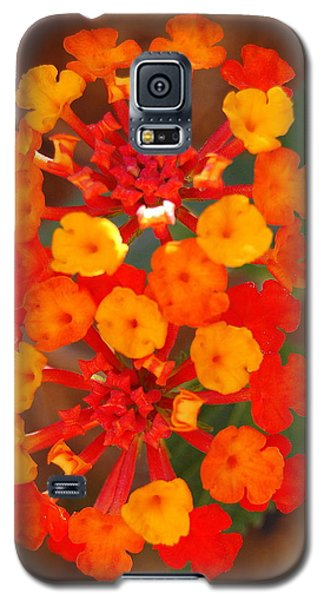 Galaxy S5 Case featuring the photograph I Love Orange by Lew Davis