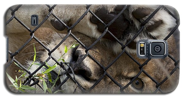 I Want To Go Home - Female African Lion Galaxy S5 Case