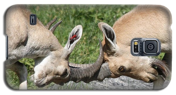 Galaxy S5 Case featuring the photograph Ibex Doing Battle by John Telfer