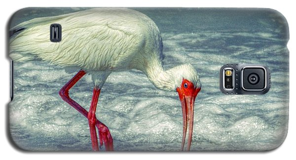 Ibis Feeding Galaxy S5 Case