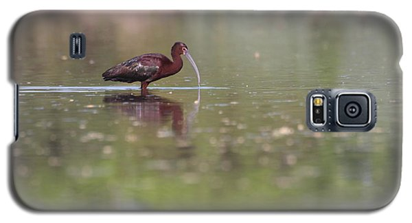 Galaxy S5 Case featuring the photograph Ibis In The Environment by Ruth Jolly