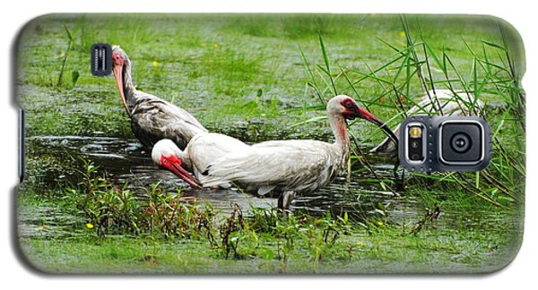 Ibis In Willow Pond Galaxy S5 Case