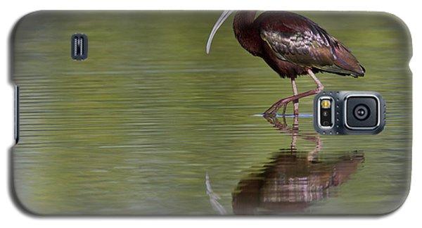 Ibis Reflection Galaxy S5 Case by Bryan Keil