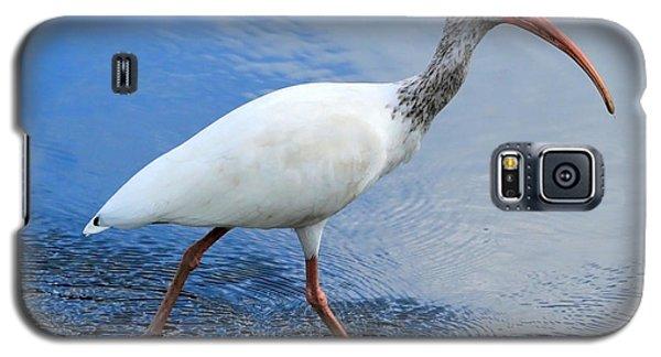 Ibis Visitor Galaxy S5 Case by Carol Groenen