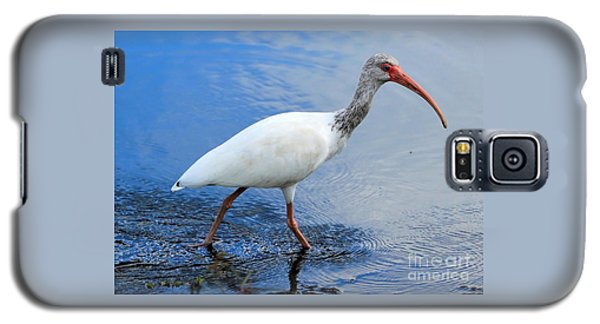 Ibis Visitor Galaxy S5 Case by Carol Groenen