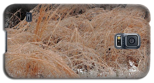 Ice And Dry Grass Galaxy S5 Case