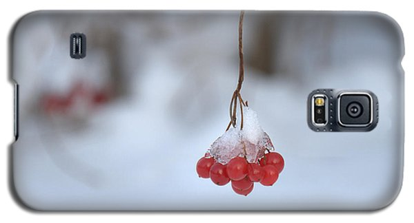 Galaxy S5 Case featuring the photograph Ice Berries by Sabine Edrissi