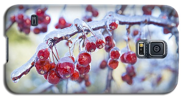 Ice Covered Crab Apples Galaxy S5 Case