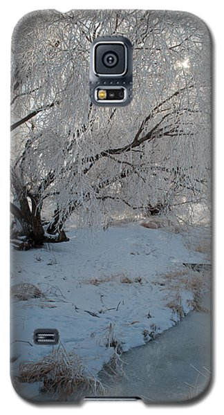 Ice Covered Tree And Creek In Montana Galaxy S5 Case