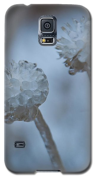 Ice-covered Winter Flowers With Blue Background Galaxy S5 Case